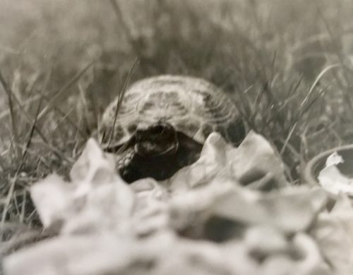 Als ich zehn Jahre alt war - meine Schildkröte Muckel