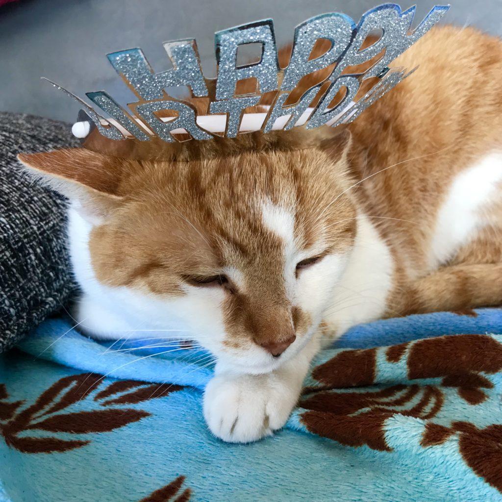 Jodokus hat gar nicht Geburtstag, wird aber bald 15 Jahre alt